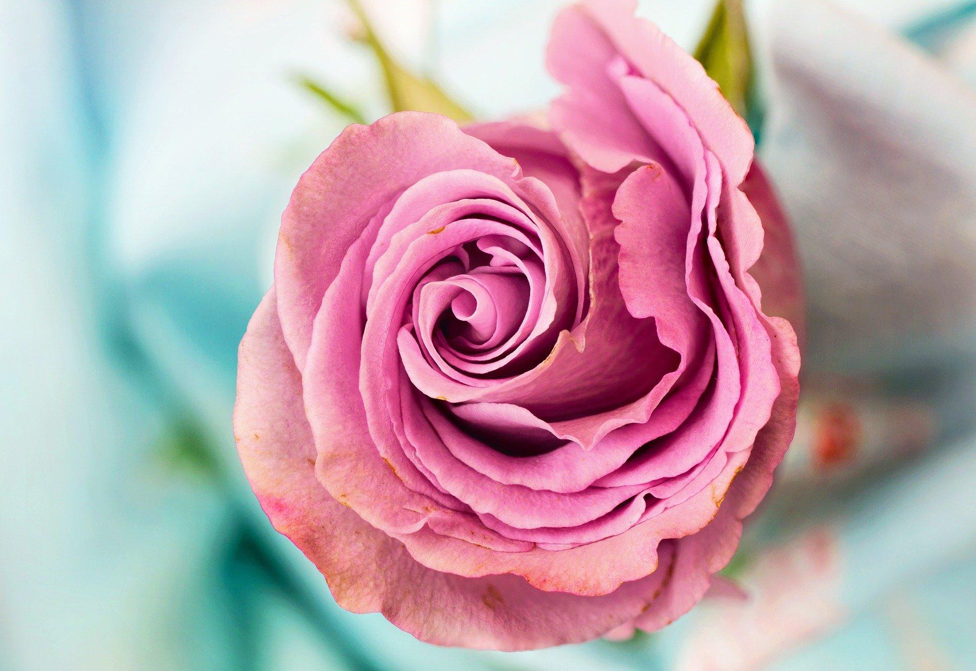 Bienfaits eau de rose
